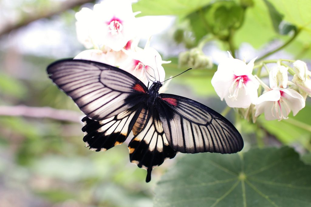 animals butterfly