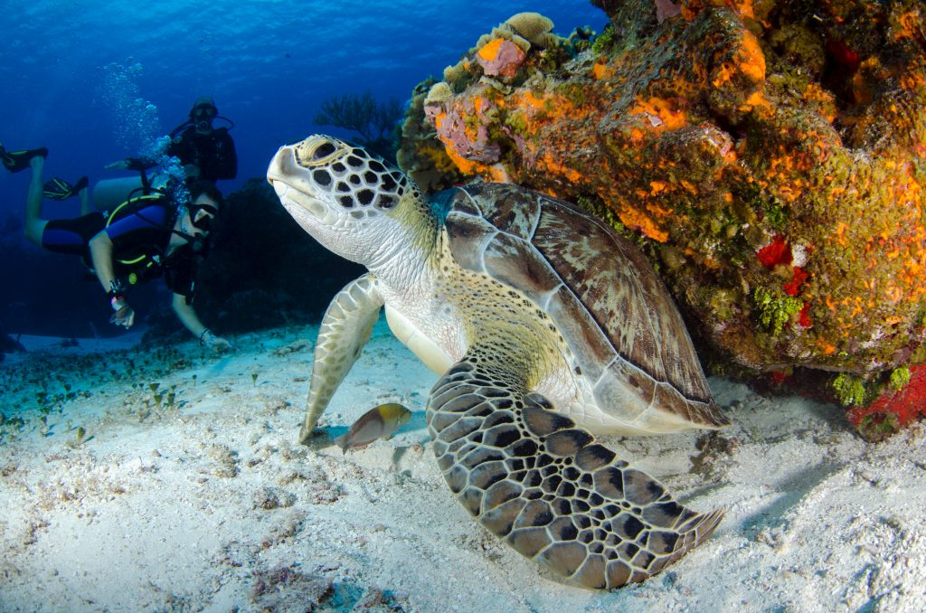 Several aspects of marine life