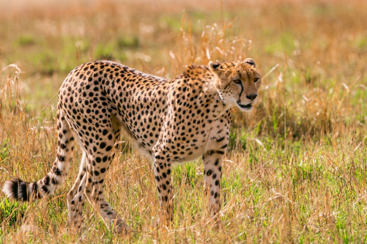The fastest animals in the world